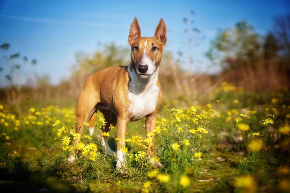 held_doggiepack_amy_blumen_sommer_hund_mensch_sheela