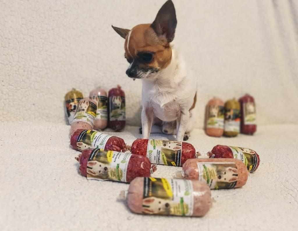 hund_mensch_doggiepack_chihuahua_freddy_klein_fertigbarf