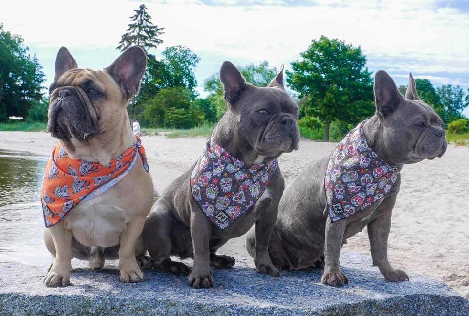bully_bande_doggiepack_hundefutter_regional_hessen_fair_frisch_artgerecht