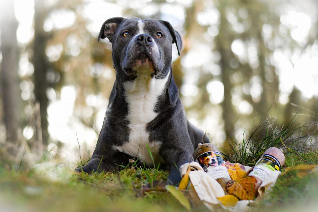 feedback_doggiepack_pablo_abenteuer_hundefutter_barf