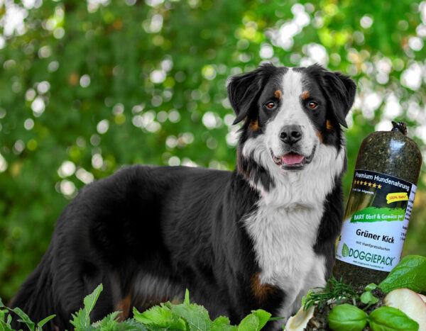 Grüner Kick mit Hanf für Hunde – BARF Gemüse pur