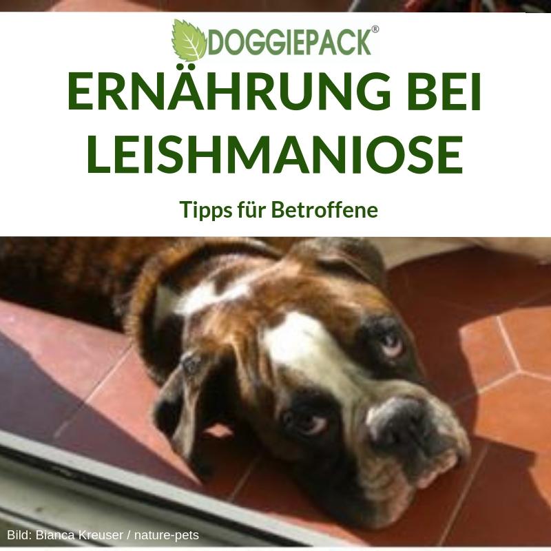 ernaehrung_leishmaniose_doggiepack_tipps