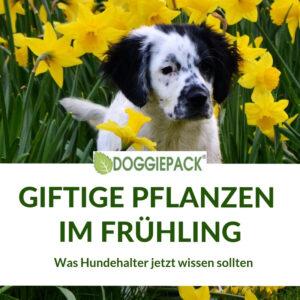 giftige-pflanzen-fuer-hunde