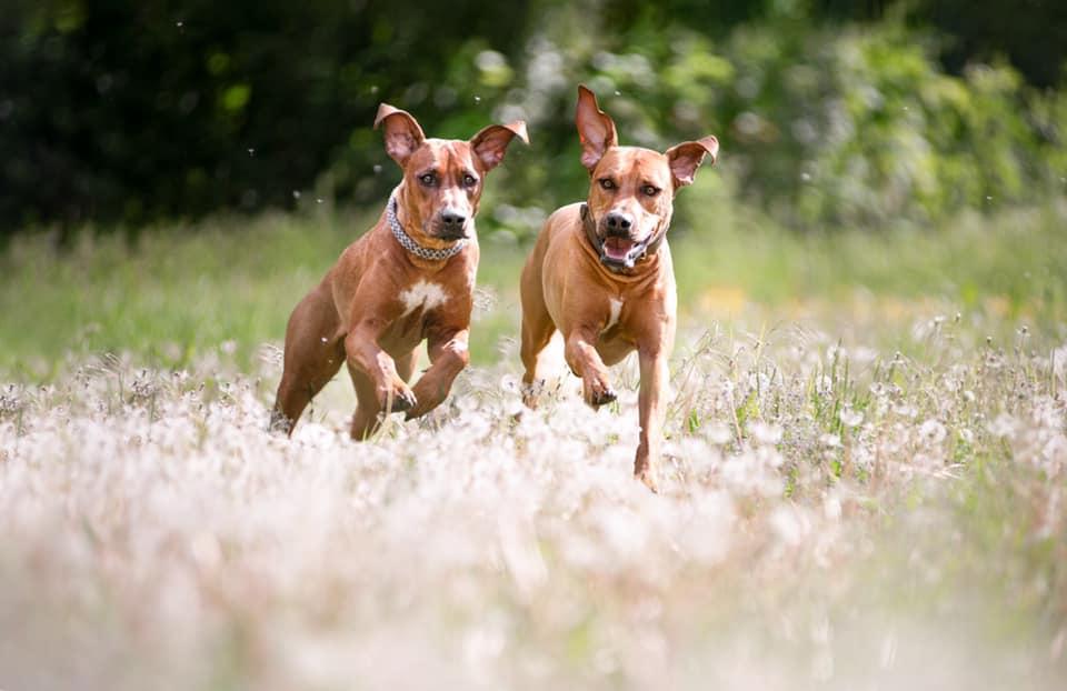 blähungen-beim-hund-bewegung-hilft-bei-der-verdauung