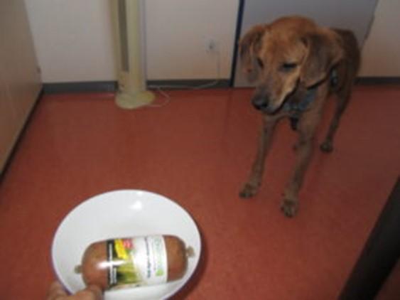 purinarmes-hundefutter-von-doggiepack