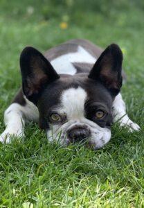 nachhaltiges-hundefutter-tut-allen-gut